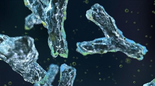 frankmagliochetti_antibodies