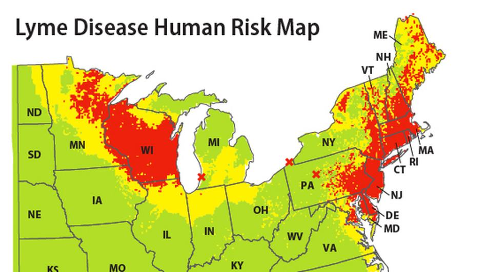 The highest human risk for Lyme disease lies in the Northeast, Mid-Atlantic and Upper Midwest.